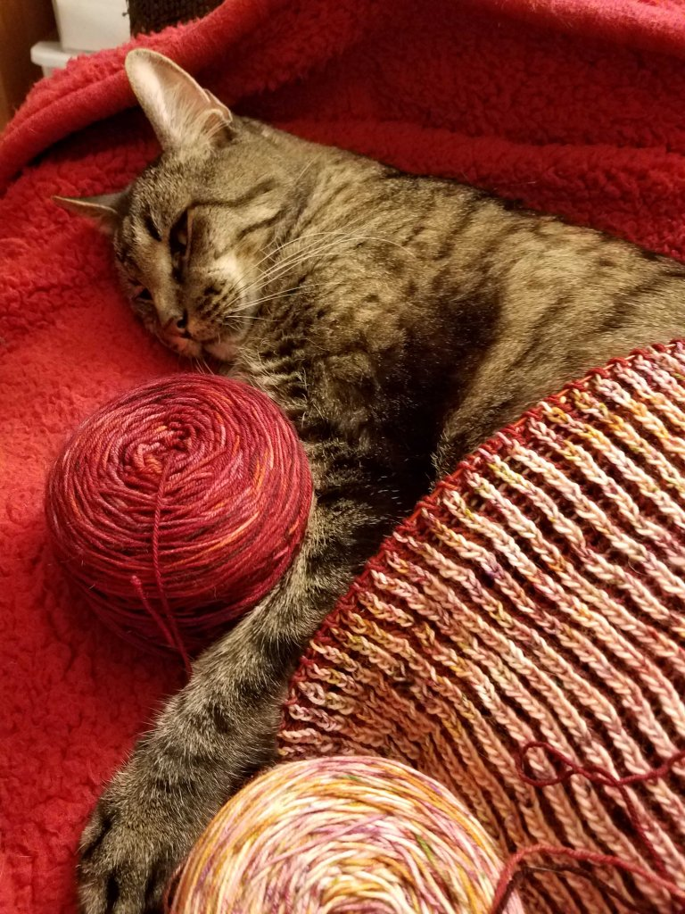 Cat asleep with knitting.