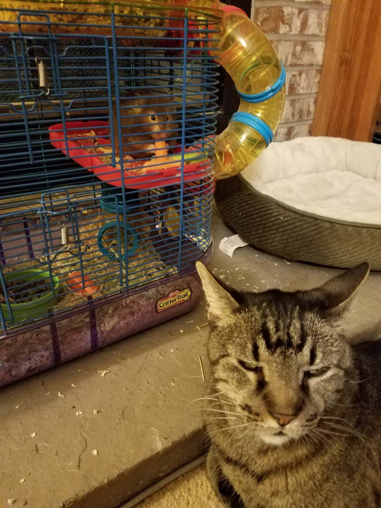 Cat snoozing with hamster.